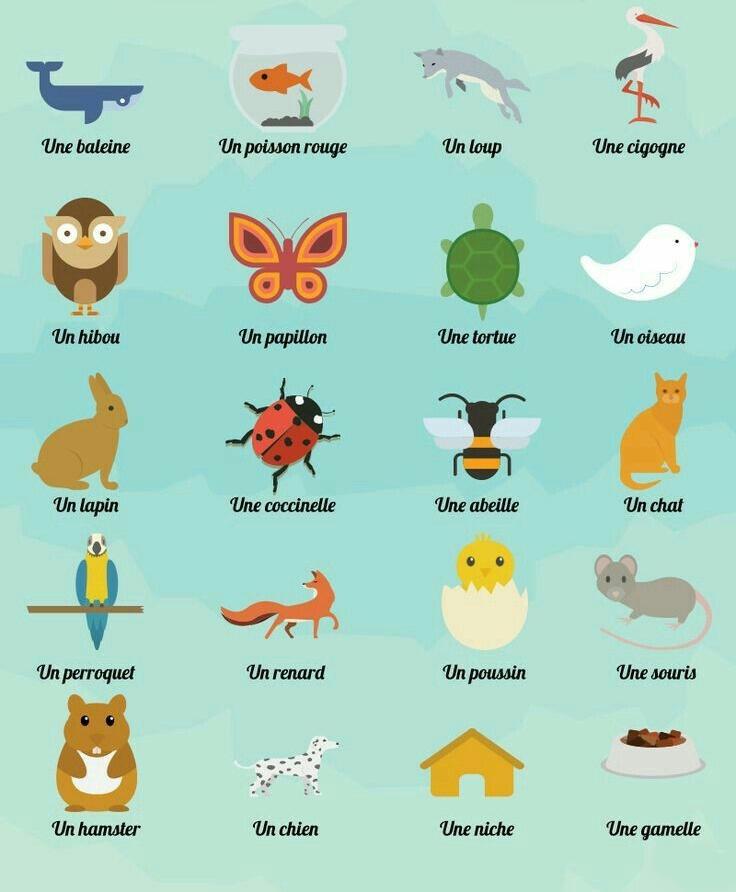 حیوانات به فرانسه