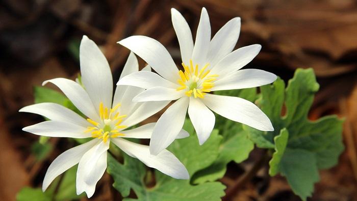 گل ها به آلمانی